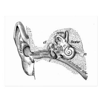 Cartão Postal Diagrama do canal de orelha do cilindro de orelha