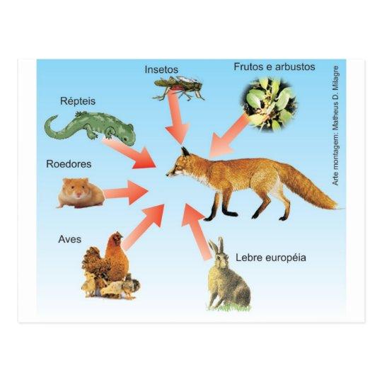Cartão Postal dietaraposa11 esquema didático dieta da raposa