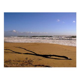Cartão Postal Disjuntores de Playa del Rey - Mike Izzo