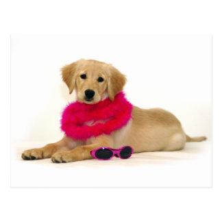 Cartão Postal Diva do filhote de cachorro do golden retriever