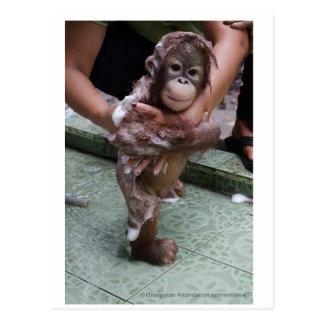 Cartão Postal Do bebê o órfão o mais bonito do orangotango nunca