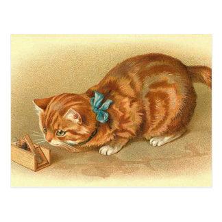 """Cartão Postal Do """"cartão gato e do rato"""""""