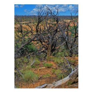 """Cartão Postal Do """"coleção do parque nacional Mesa Verde"""""""