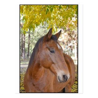 Cartão Postal ~ do disparador o cavalo incrível do salvamento