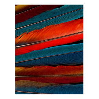 Cartão Postal Do Macaw escarlate de penas de cauda