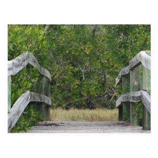 Cartão Postal Doca que conduz no suporte verde dos manguezais