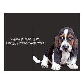 Cartão Postal doggy