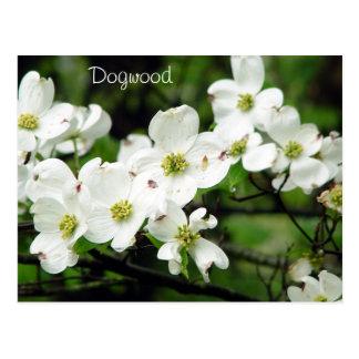 Cartão Postal Dogwood