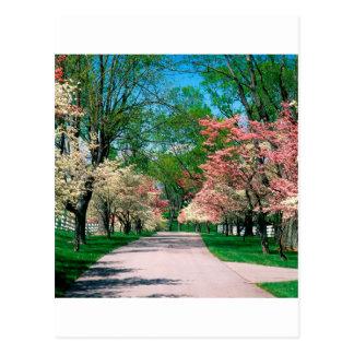 Cartão Postal Dogwood branco cor-de-rosa Lexington Kentucky das