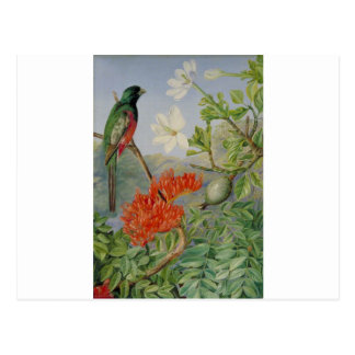 Cartão Postal Dois arbustos de florescência de natal e de um