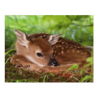 Cartão Postal Dois - bebê Branco-atado dias de idade dos cervos,