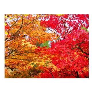 Cartão Postal Dois bordos no outono