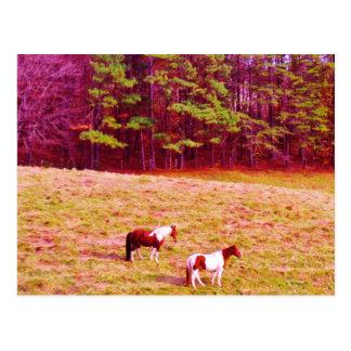 Cartão Postal Dois cavalos pintados