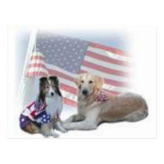 Cartão Postal dois collies dos cães