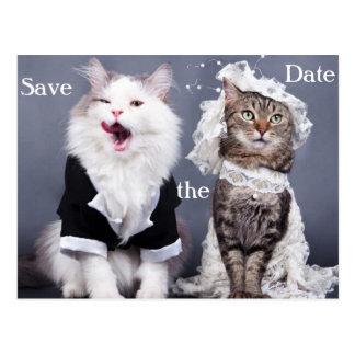 Cartão Postal dois gatos bonitos