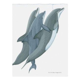 Cartão Postal Dois golfinhos de Bottlenosed