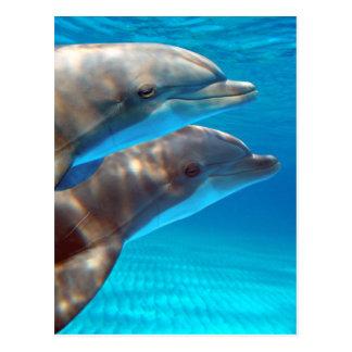 Cartão Postal Dois golfinhos que nadam