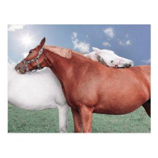 Cartão Postal dois namorou cavalos