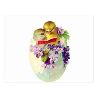 Cartão Postal Dois pintinhos no ovo Shell cantam do cancioneiro