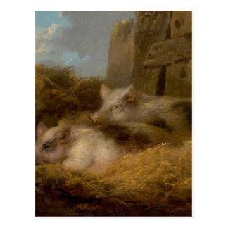 Cartão Postal Dois porcos na palha (celeiro com porcos) por