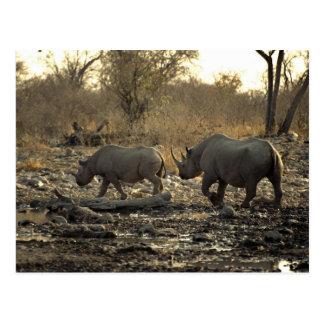 Cartão Postal Dois rhinos