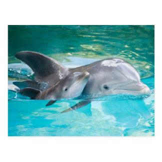 Cartão Postal Dolphin with calf