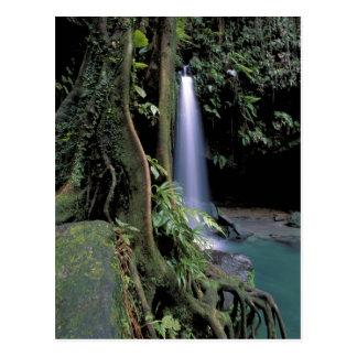 Cartão Postal Dominica, piscina esmeralda, cachoeira