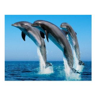 Cartão Postal Dophins jumping