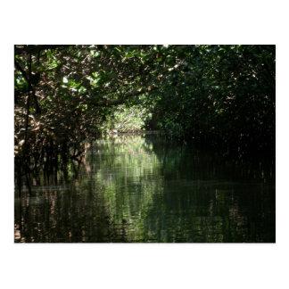 Cartão Postal Dossel dos manguezais, Tenacatita, México