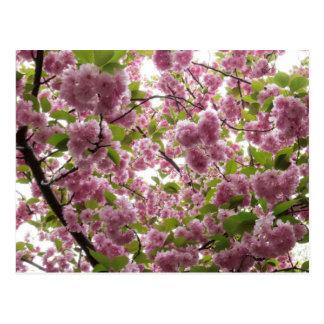 Cartão Postal Dossel II da flor de cerejeira