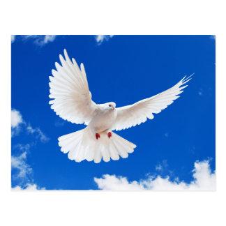Cartão Postal Dove whites