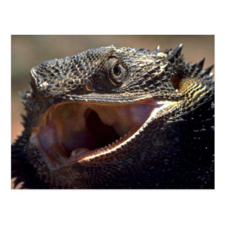 Cartão Postal Dragão farpado, Austrália