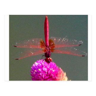 Cartão Postal dragonfly_by_shimanie