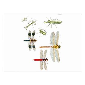 Cartão Postal dragonfly-clip-art-4