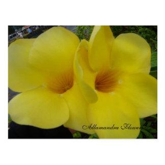 Cartão Postal DSC03203, flores de Allamandra - Cus… -