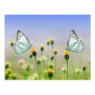 Cartão Postal Duas borboletas, duas flores
