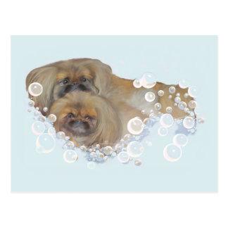 Cartão Postal Duo de Pekingese do tempo do banho