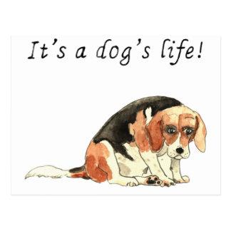 Cartão Postal É slogan bonito engraçado da arte do cão do