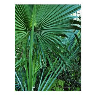 Cartão Postal E.U. Virgin Islands, St Thomas, folhas tropicais