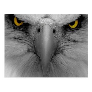 Cartão Postal Eagle