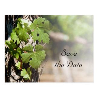 Cartão Postal Economias do casamento do vinhedo das folhas da