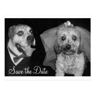 Cartão Postal Economias do Doggy a data