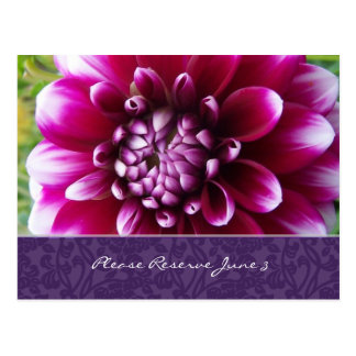Cartão Postal Economias roxas da dália de Fuschia a data