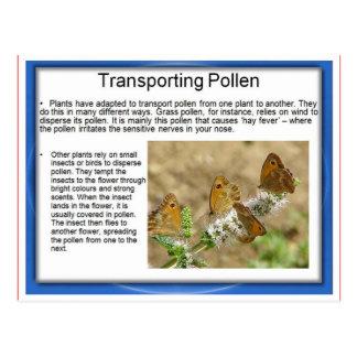 Cartão Postal Educação, ciência, vida, transportando o pólen