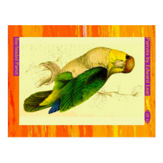 Cartão Postal Edward Lear. papagaio Baía-dirigido