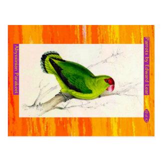 Cartão Postal Edward Lear. Parakeet. Abyssinian
