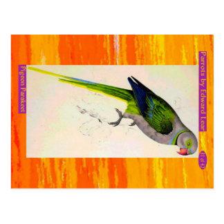 Cartão Postal Edward Lear. Parakeet. do pombo