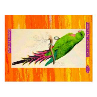 Cartão Postal Edward Lear. Parakeet. róseo