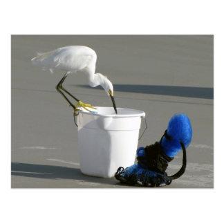 Cartão Postal Egret nevado em um balde da isca
