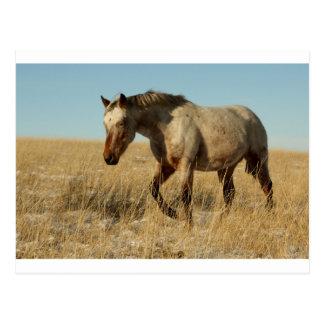 Cartão Postal Égua do Appaloosa nas pradarias